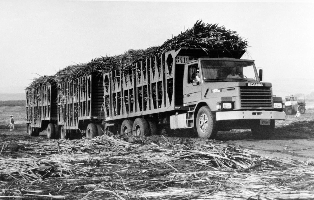 Cukornád-betakarítás Brazíliában, gumikerekű tehervonattal